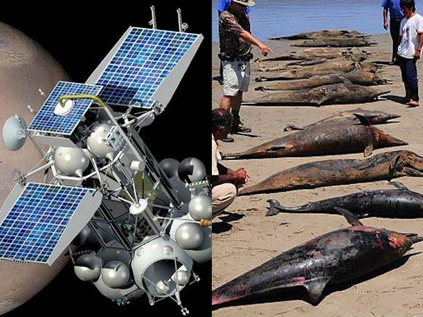 Sat&eacute;lite Fobos Grunt puede ser culpable por muerte de delfines en Per&uacute;, sostienen
