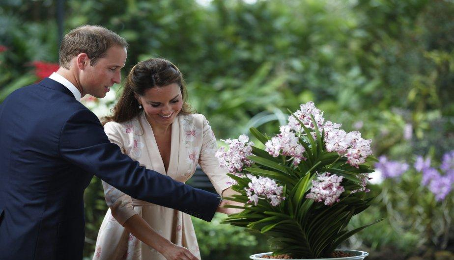 Kate Middleton y el Pr&iacute;ncipe William pasean por Singapur (FOTOS)