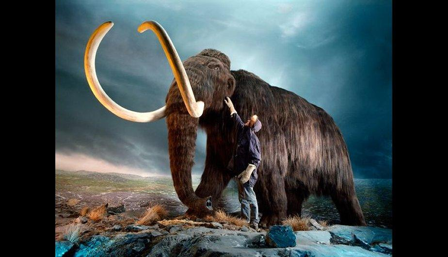 Mamut lanudo (Mammuthus primigenius). (Foto: National Geographic)