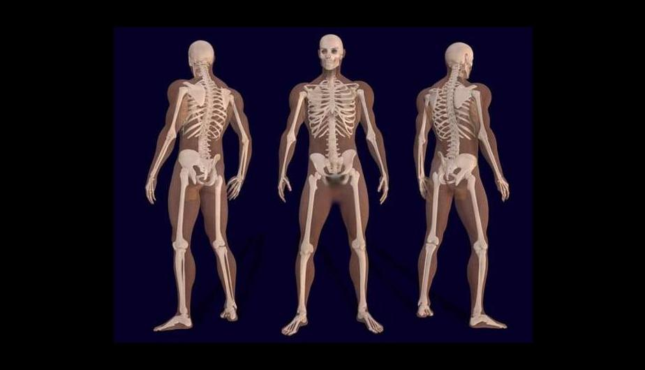 19 Fun Facts About The Human Body That You May Not Know