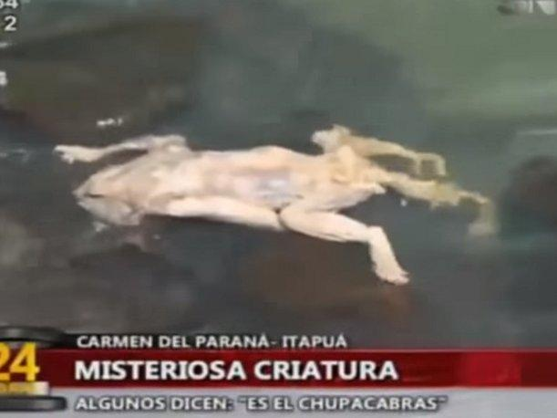 YouTube Hallan rara criatura flotando en río de Paraguay (VIDEO)