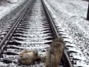 Facebook: Dog spends 2 days on frozen rail-tracks trying to save injured pal