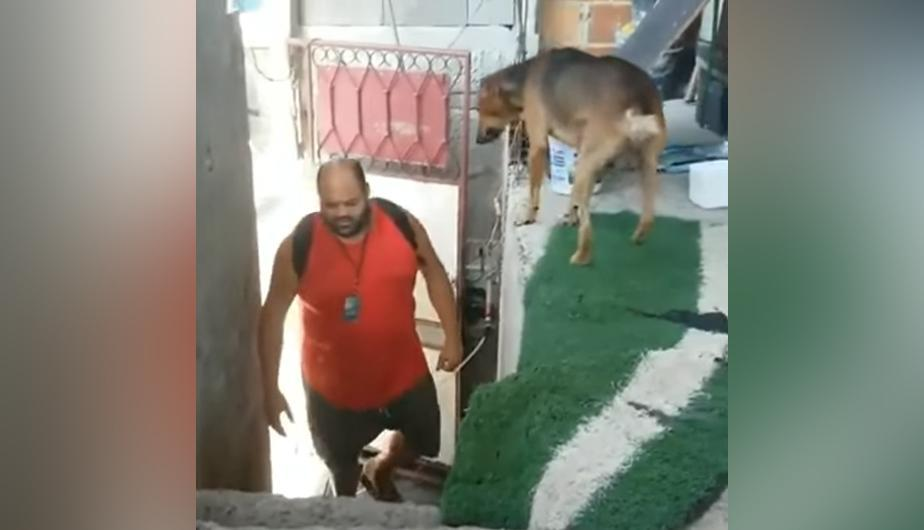 YouTube Video Viral: un perrito tuvo una bonita reacción al ver a su dueño.(foto: Videos Virales)