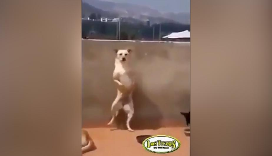 YouTube Video: un perrito se robó el show. (foto: Mundo Viral)
