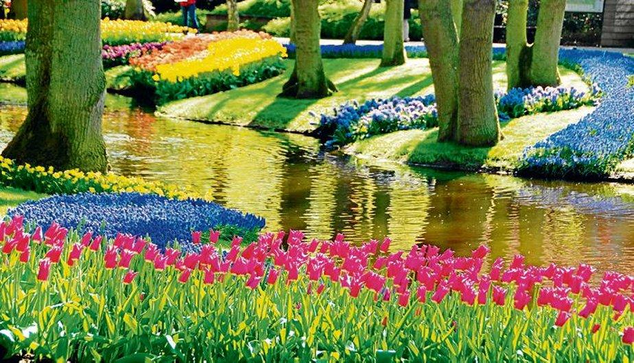 jardines de keukenhof un para so de flores en holanda fotos. Black Bedroom Furniture Sets. Home Design Ideas