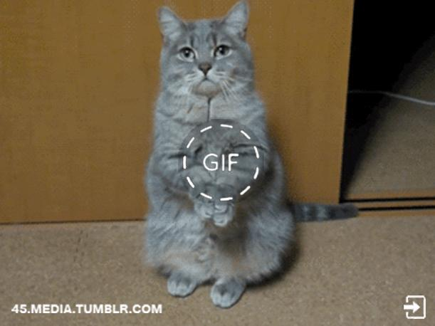 Viral Cat Video Facebook