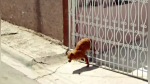 Google Maps capta a tierno perrito en un fallido intento de escape - Noticias de vivienda